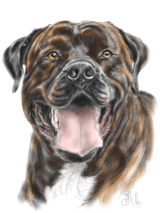 pet animal portrait drawing iPet iPad