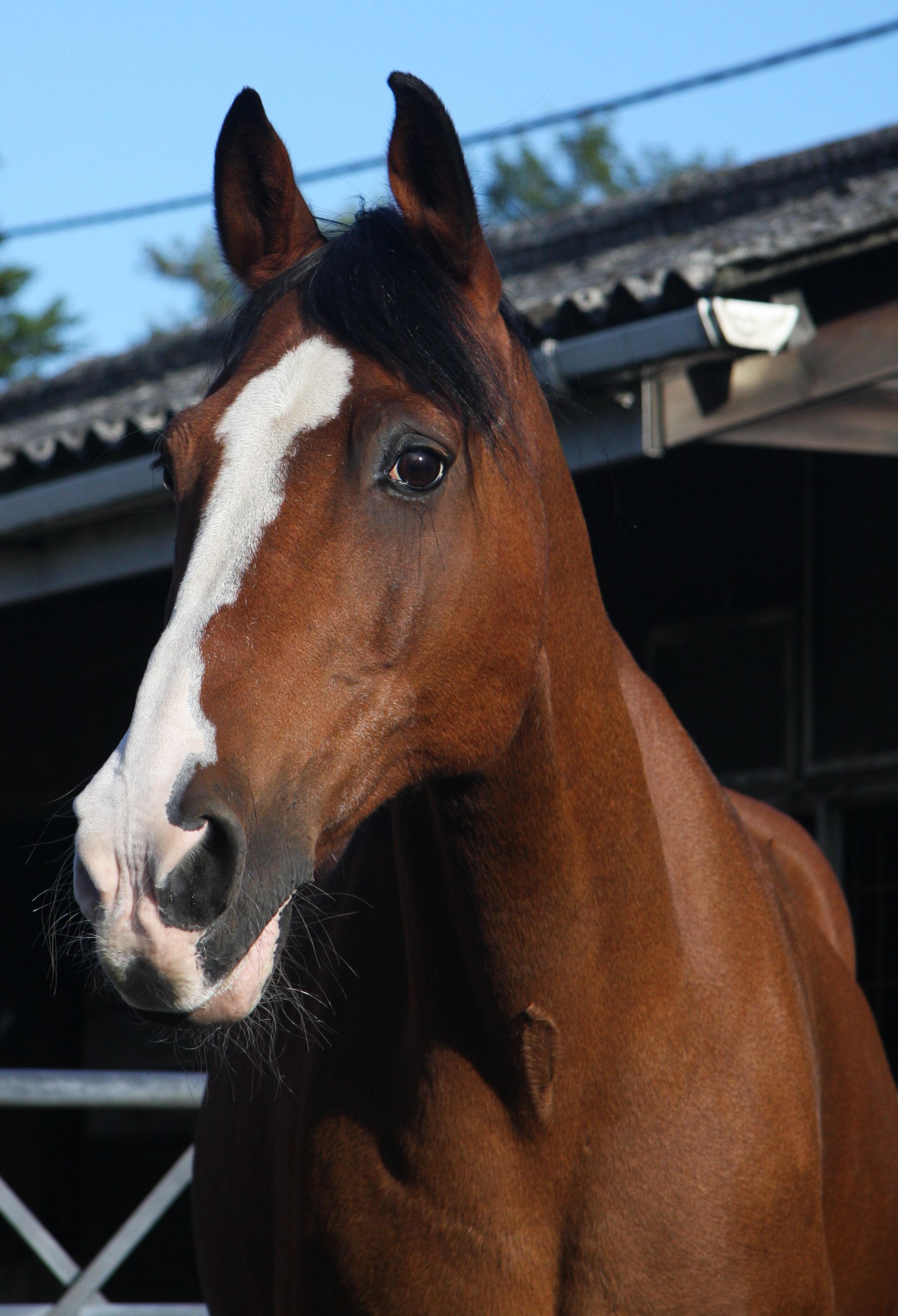 Helen's mum's horse