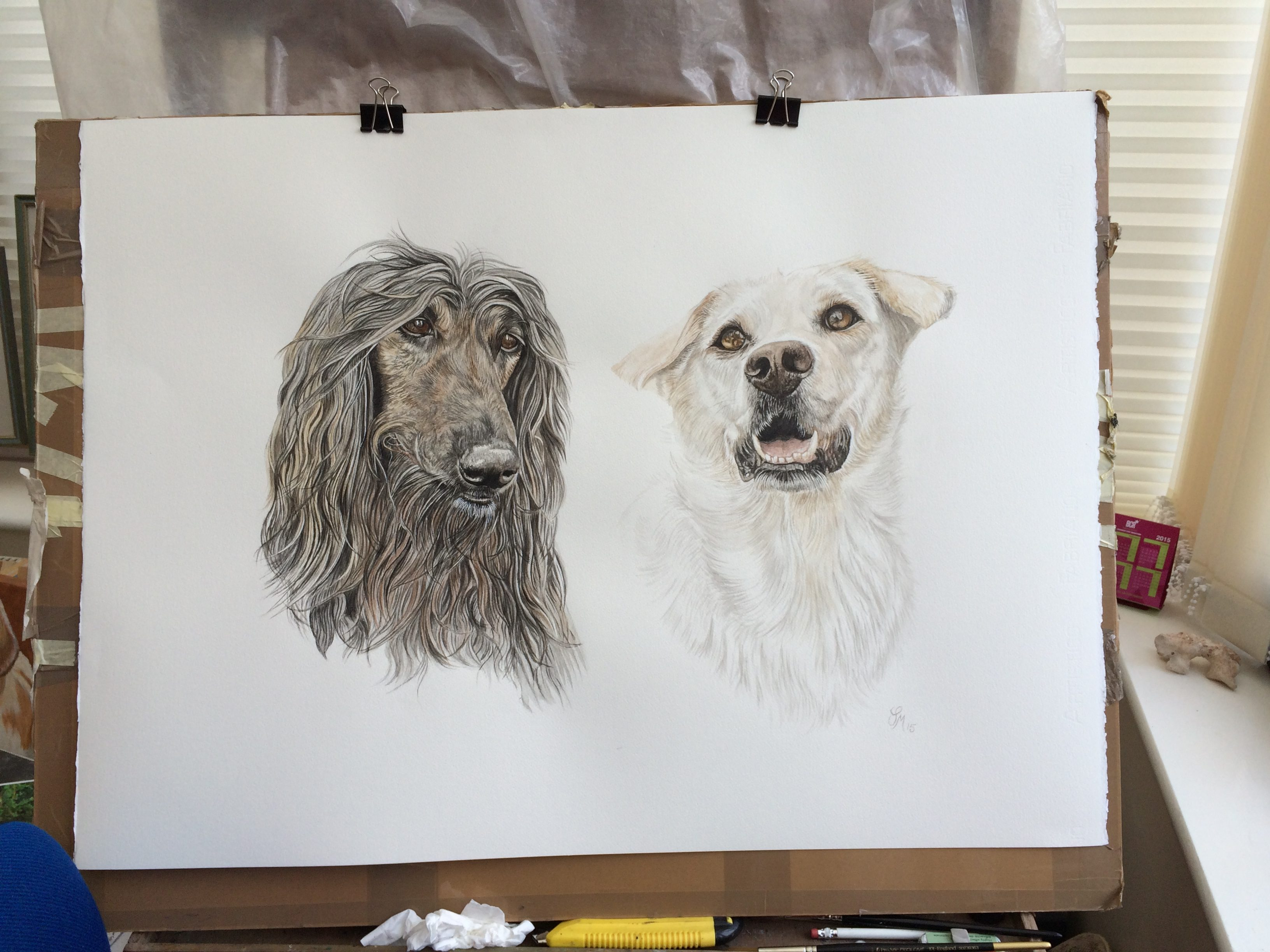 dog animal pet portrait