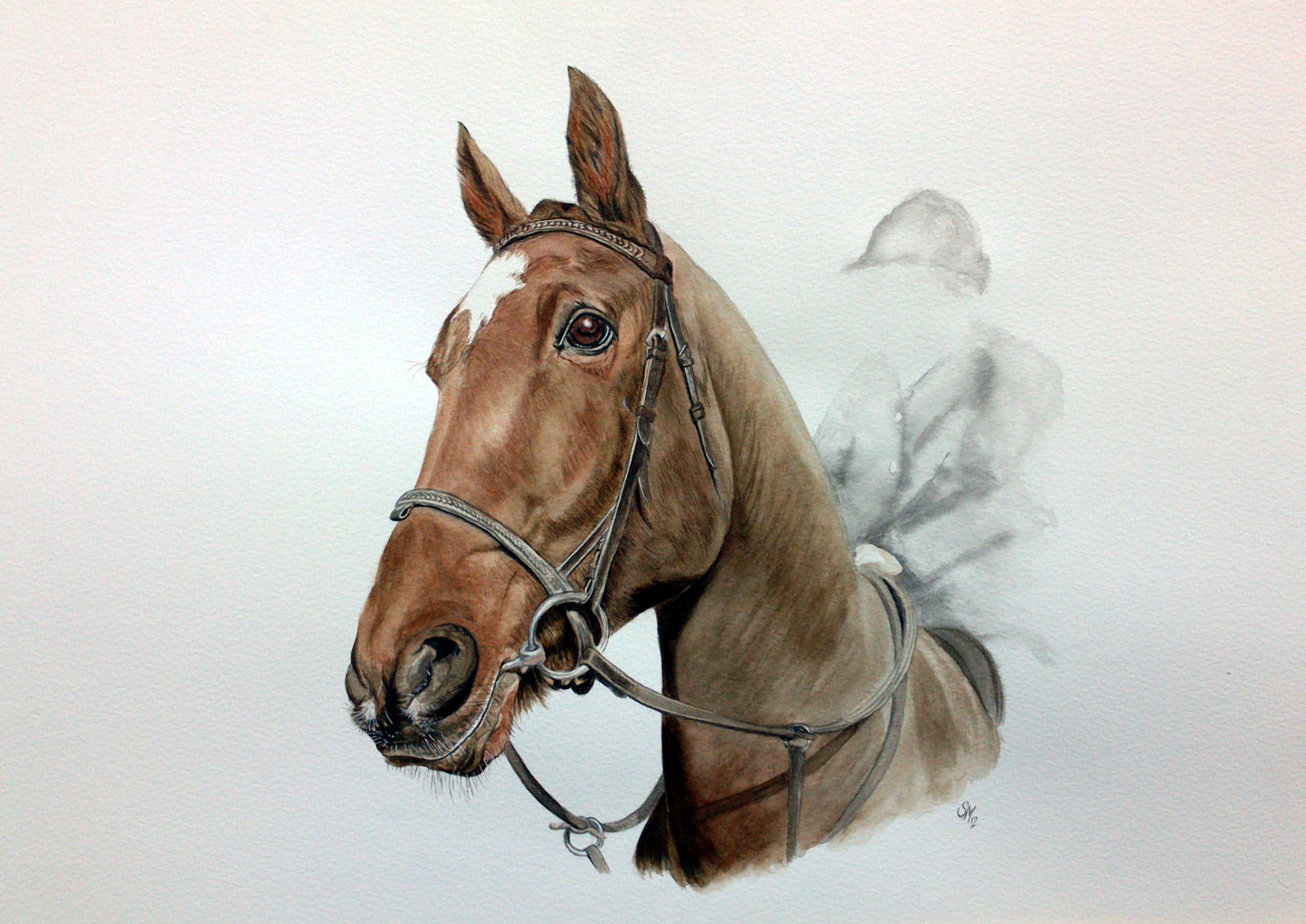 equine horses pet animal portrait