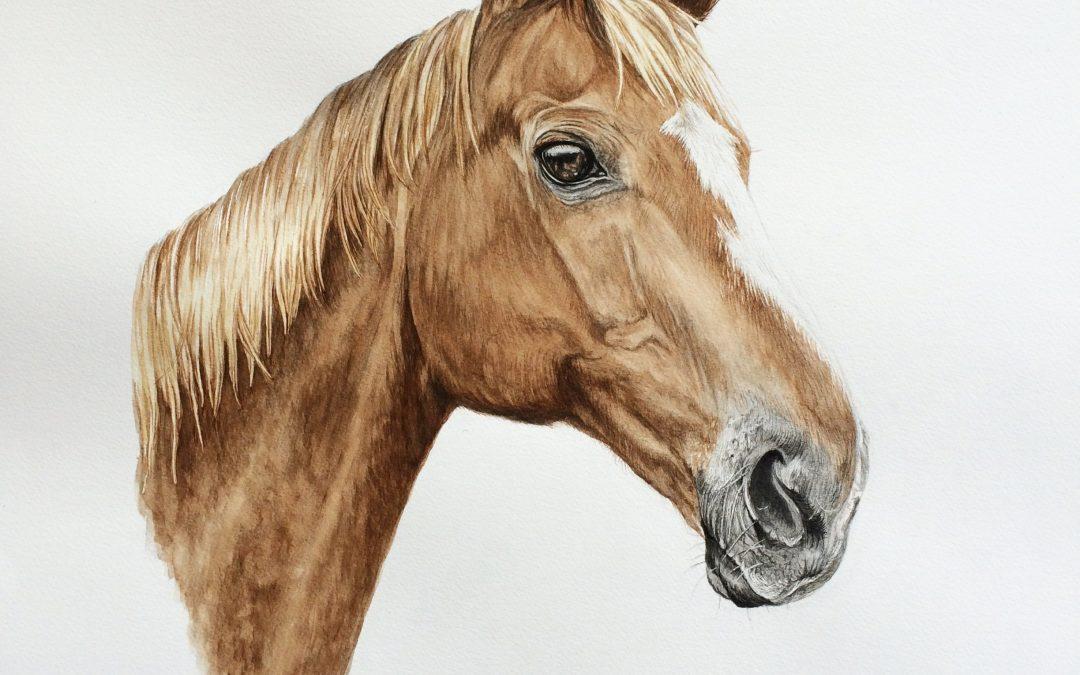 equine horses pet animal portrait