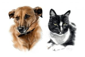 Pet portrait cat and dog by Sue Mclachlan