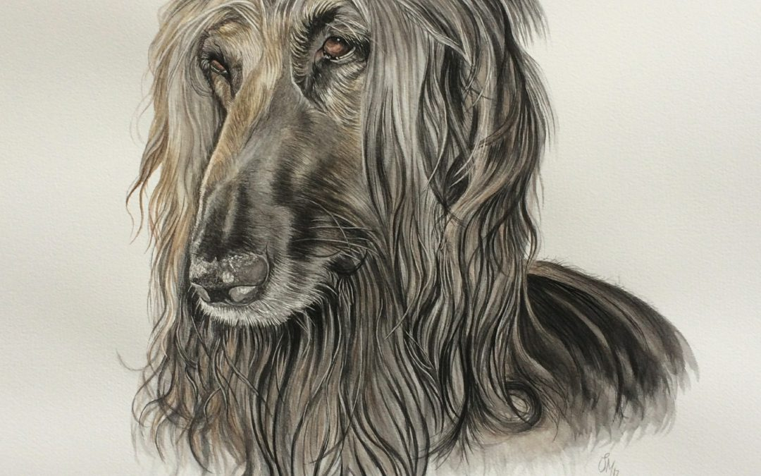 Pet Portrait in Watercolour for a lovely client!