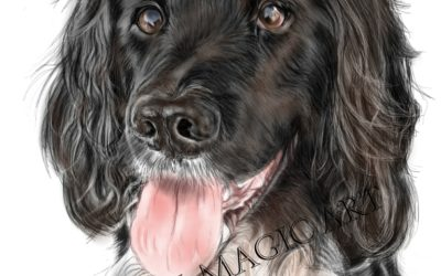 Recent iPet Pet Portrait