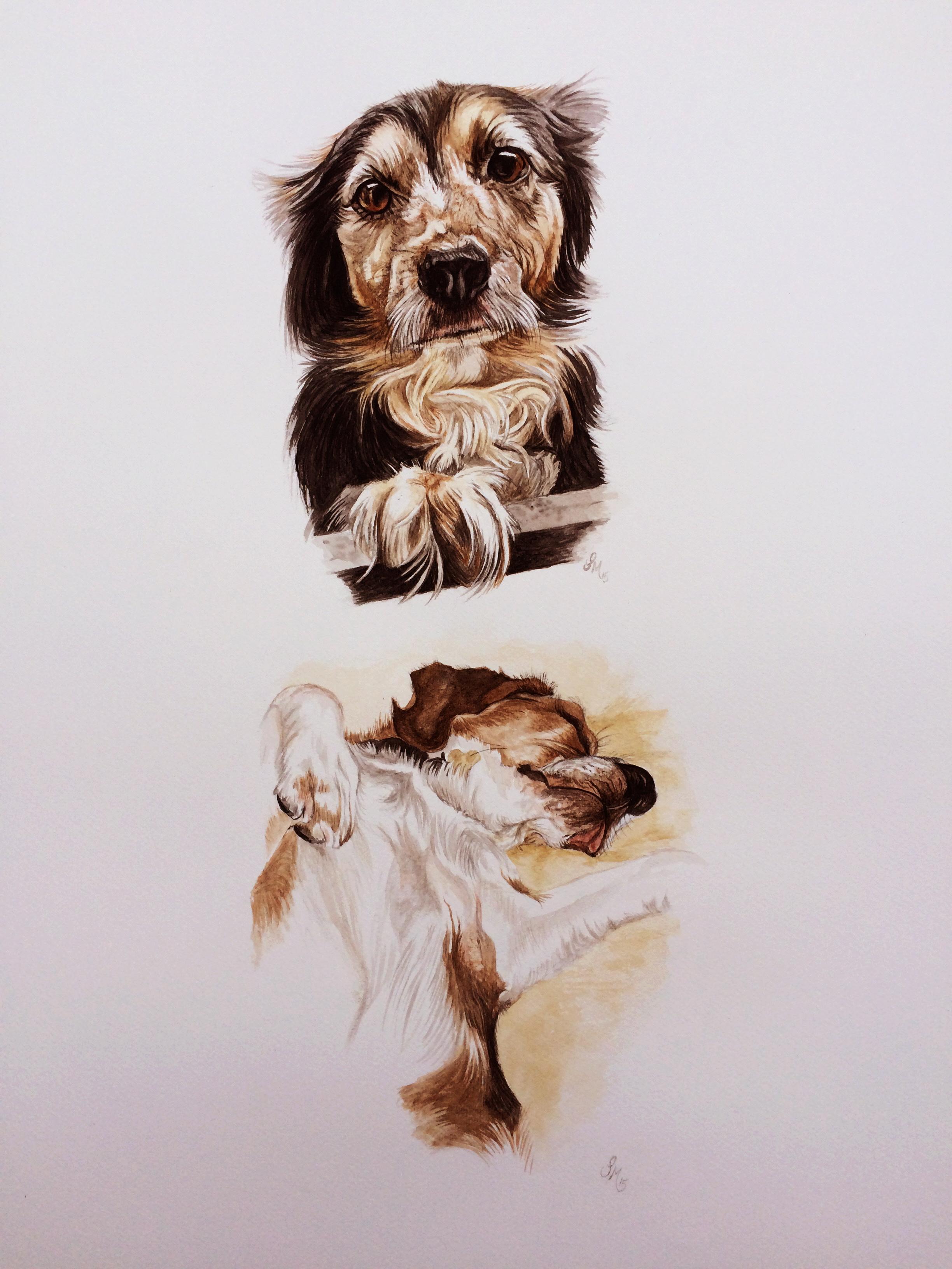 dog animal pet portrait