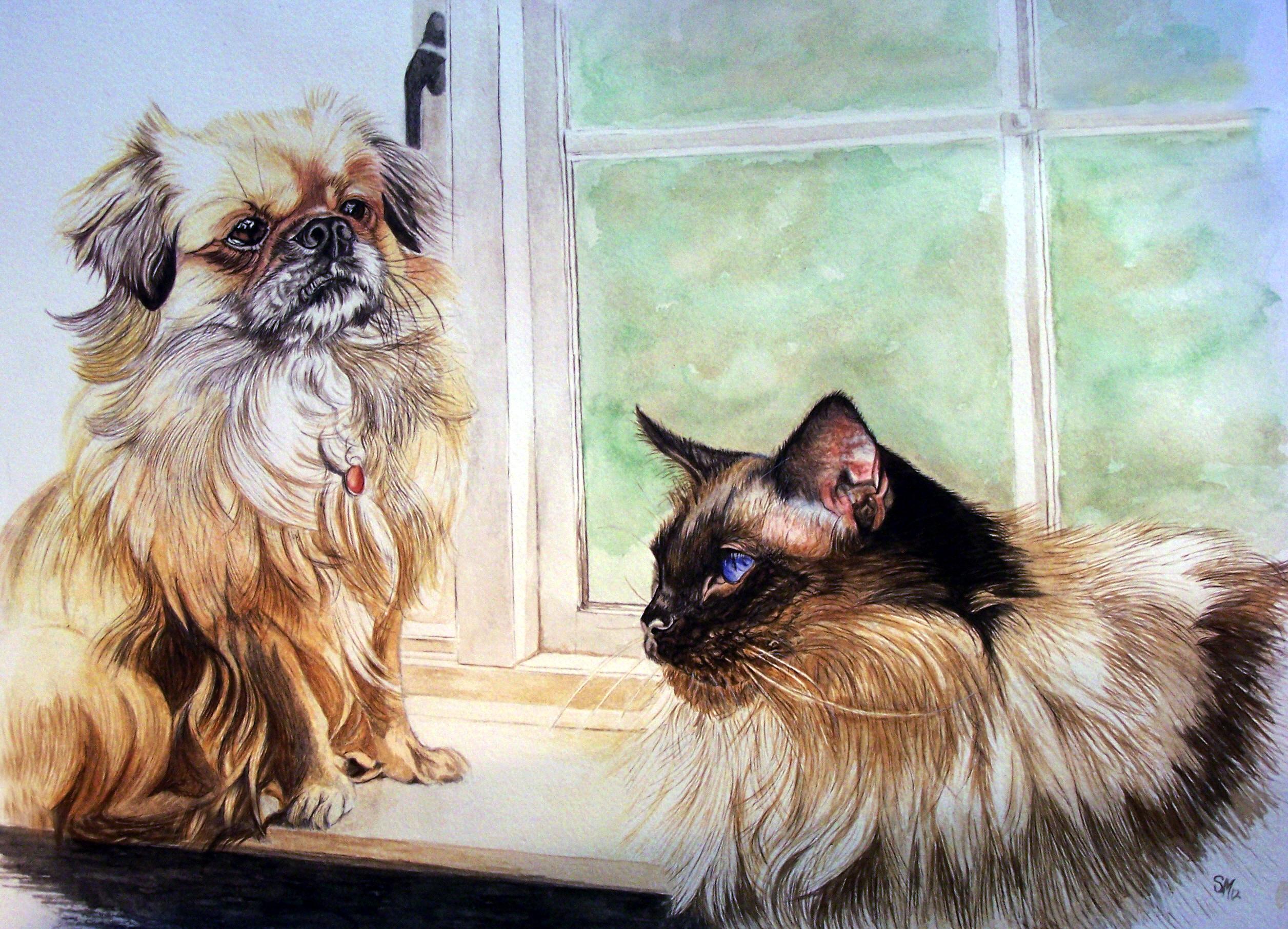 cats dogs pet animal portrait