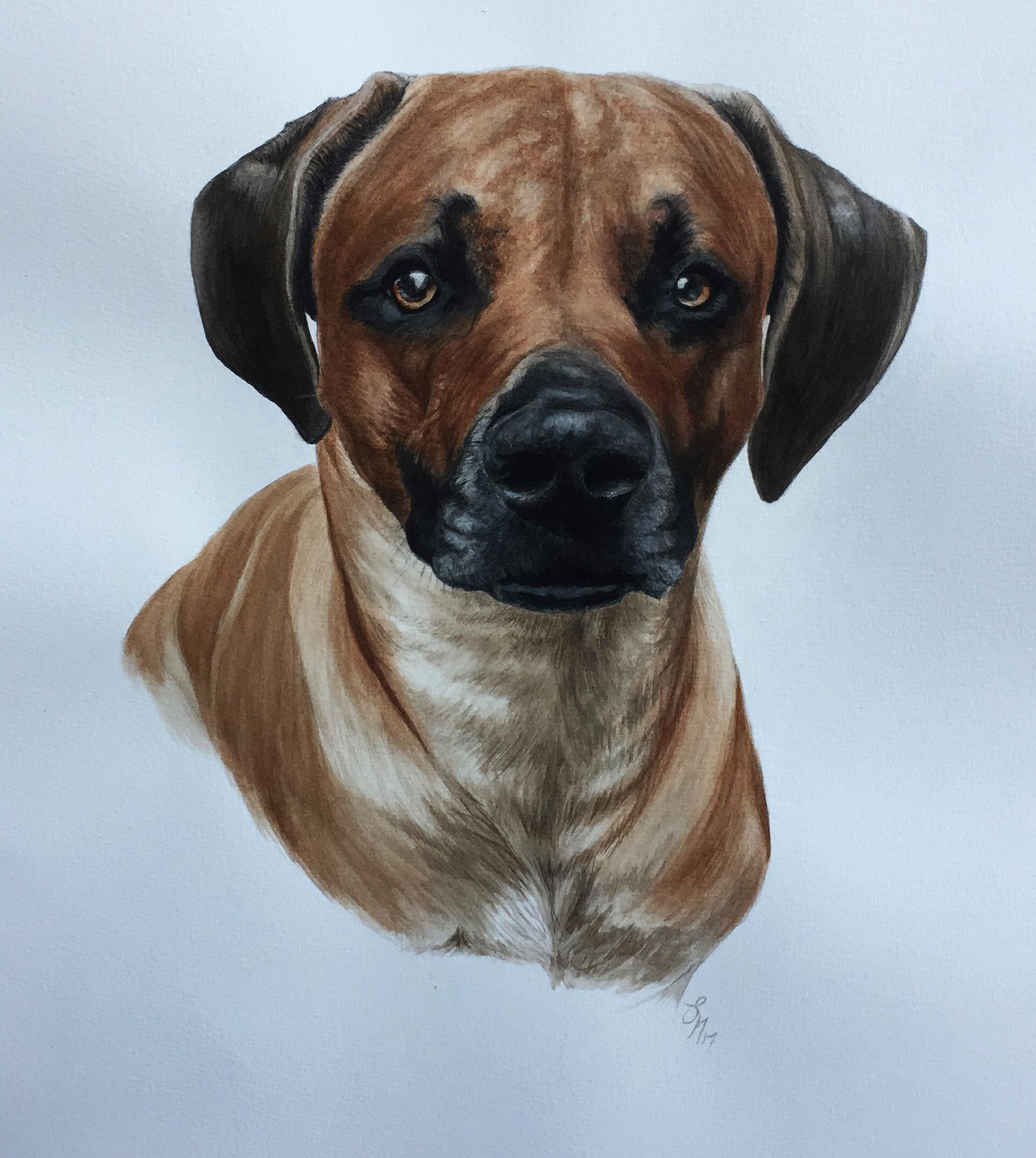 Pet, animal, portrait, painting, watercolours, animal art,